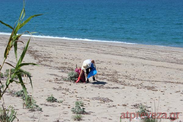 """Αποτέλεσμα εικόνας για Πρέβεζα: εθελοντές  καθαρισαν την παραλία Μονολιθίου"""""""