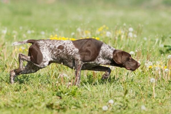24χρονος έκλεβε κυνηγετικά σκυλιά στην Πάργα
