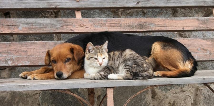 """Πρέβεζα: Ανοιχτή επιστολή της """"Παρέμβασης για τα ζώα"""""""