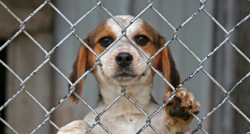 """Ανακαλείται η άδεια του καταφυγίου αδέσποτων ζώων στο Νεοχώρι - """"Καυτή πατάτα"""" στα χέρια της δημοτικής αρχής"""