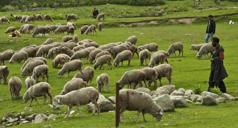 Μεγάλα τα προβλήματα των κτηνοτρόφων στην Ήπειρο – Στη Βουλή έφερε το θέμα το ΚΚΕ